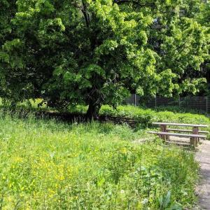 A81 Parkplatz Grafenwald