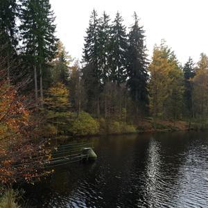 PP  Neuer Teich zwischen Uslar und Dassel