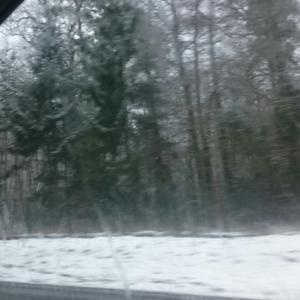 Wald Moorkaten in Kaltenkirchen
